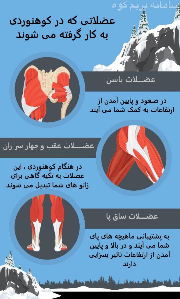 عضلاتی که در کوهنوردی به کار گرفته می شوند