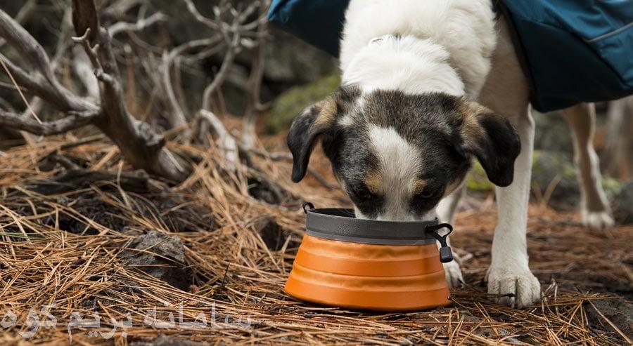 اگر قصد دارید تا تمام روز را با سگتان به طبعیت گردی و کوهنوردی اختصاص دهید ، پس سگتان به غذای بیشتری از حد معمول نیاز خواهد داشت .