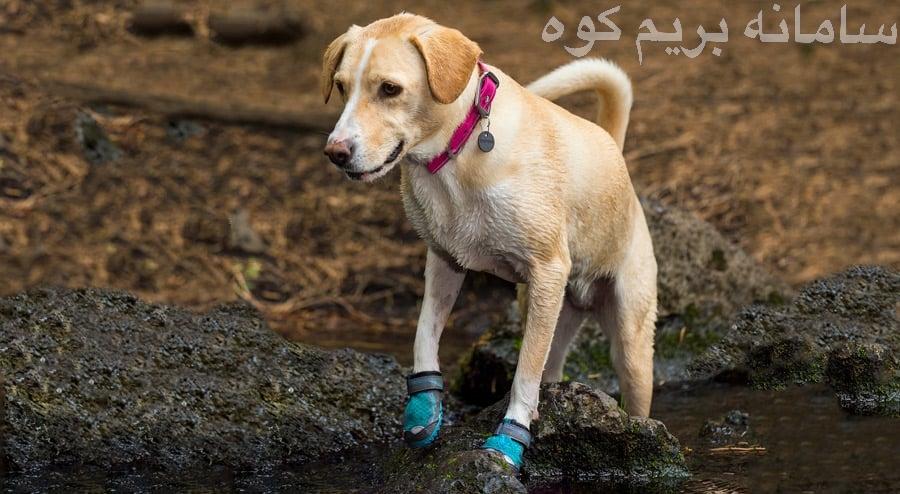 دیگر تجهیزات مورد نیاز سگ ها