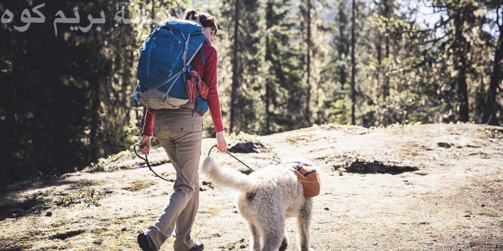 چند مسیر تمرینی و آسان با سگ خود طی کنید .