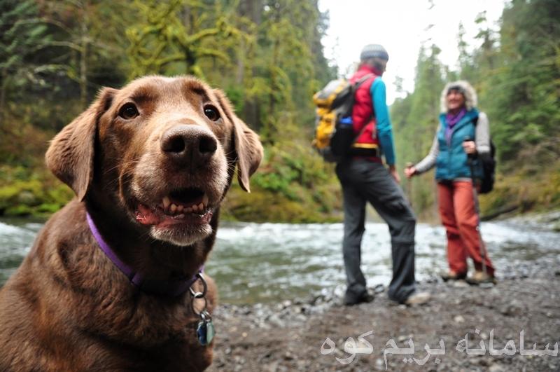 به سگ خود مهارت های اطاعت و فرمانبردای و آداب و معاشرت با دیگران را بیاموزید .