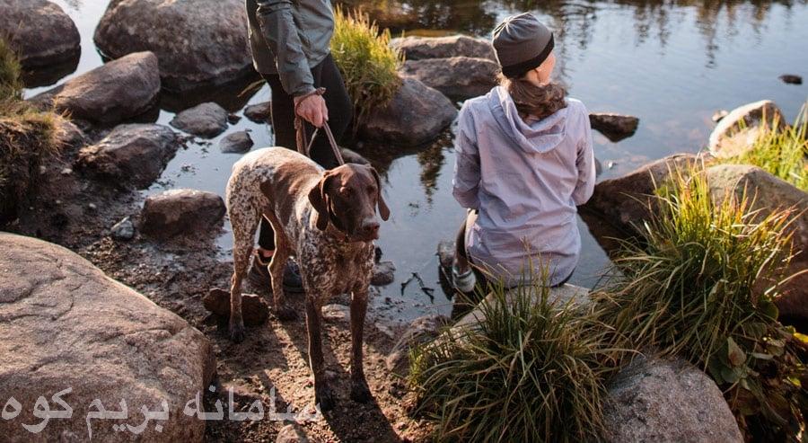 بیشتر خطراتی که جان شما را در مسیر تهدید می کنند، می توانند گریبان گیر سگ شما نیز بشوند.