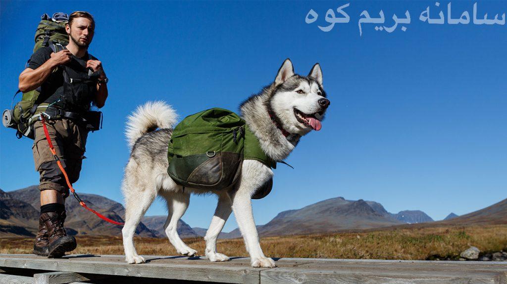 آماده سازی و تمرین سگ قبل از صعود