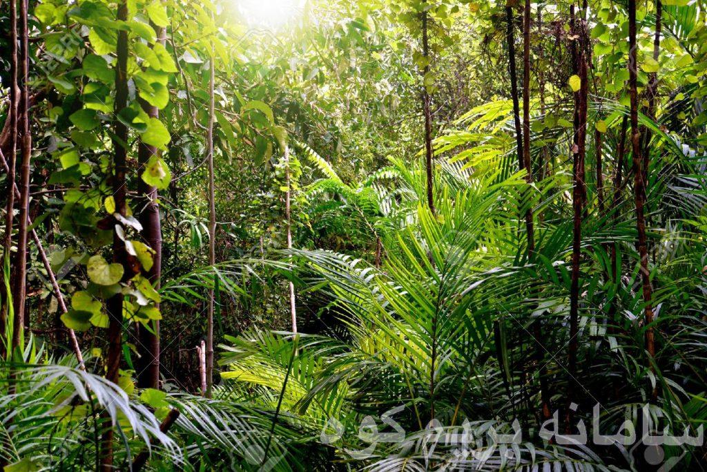 موارد بهداشـــــتی و ایمنی در جنگل :