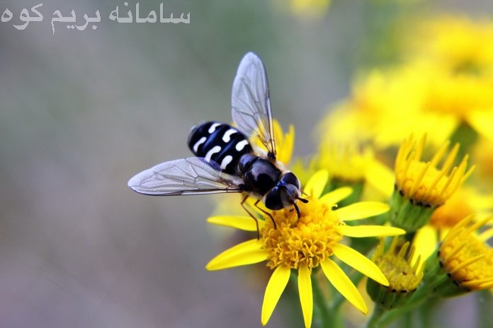 """تریمبل می گوید : در مناطق جنوبی و گرم تر، با شروع فصل بهار، حشرات و کنه ها نیز فصل جدید خود را جشن می گیرند ! """""""