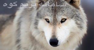مبارزه با گرگ